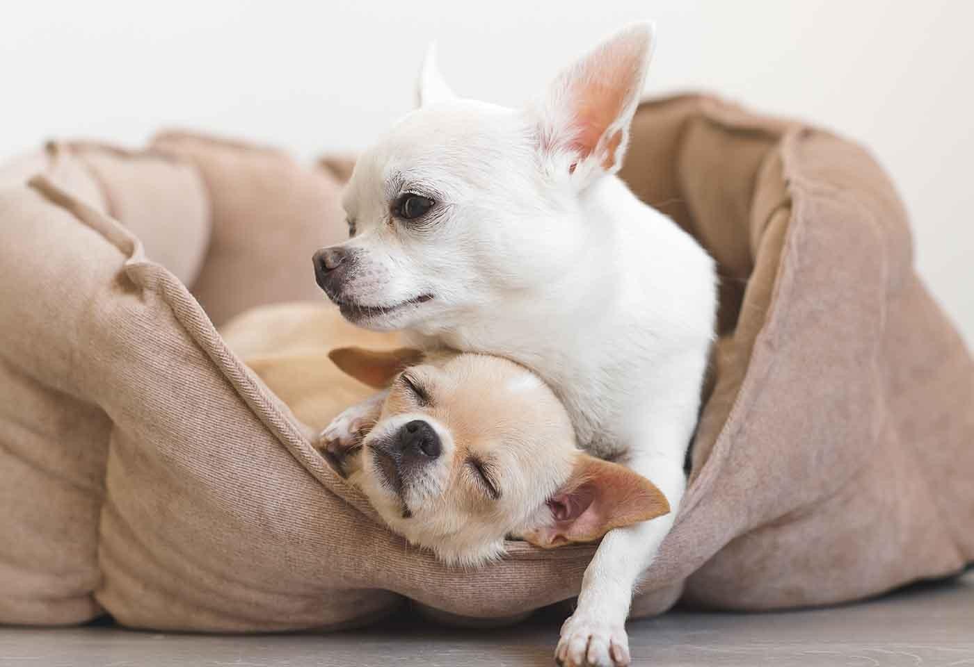 Cuccia Per Cani Fai Da Te L Arredo Per I Tuoi Amici A