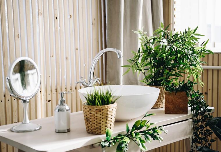 Quali sono le piante per il bagno migliori e come usarle?
